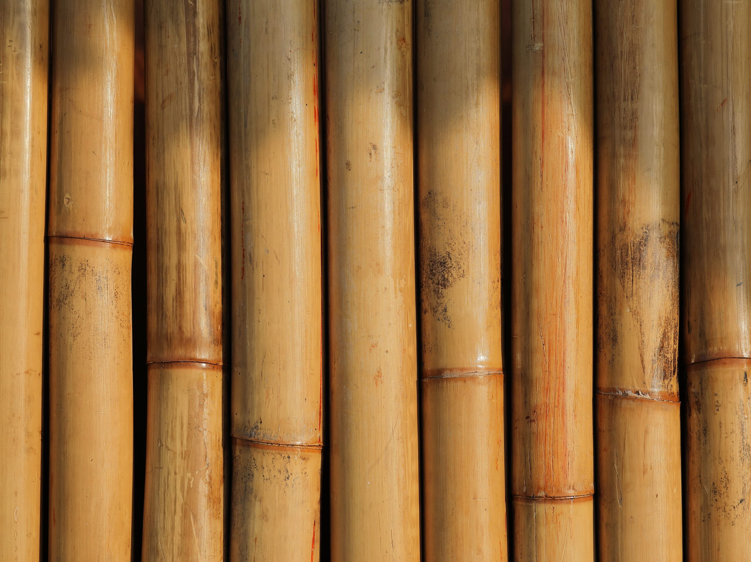 Dry bamboo waiting to be made into eco-friendly goods